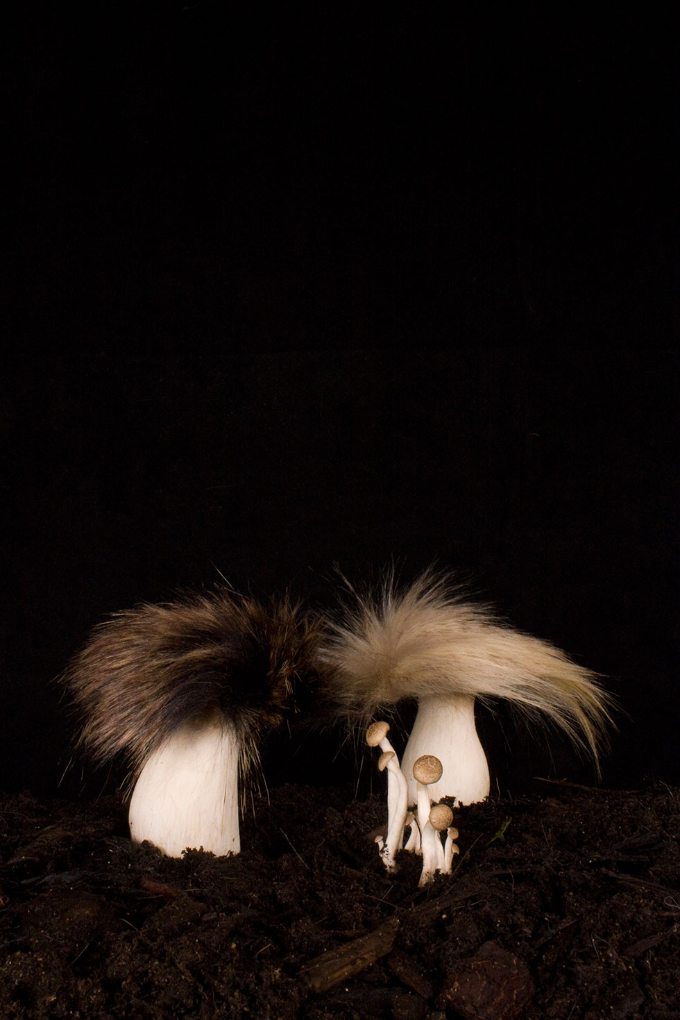 Racoon and Linx Fungi, Carole Collet, 2014